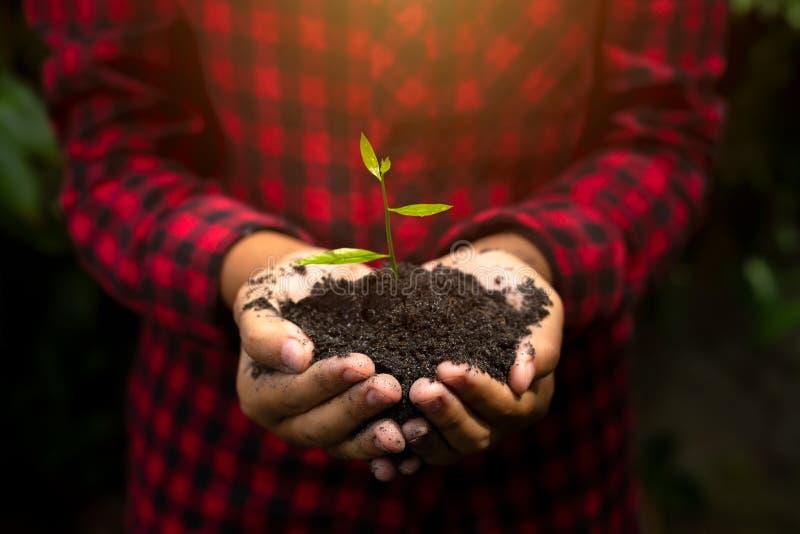 Entregue guardar a planta com bokeh e o fundo da natureza, salvar o wo foto de stock