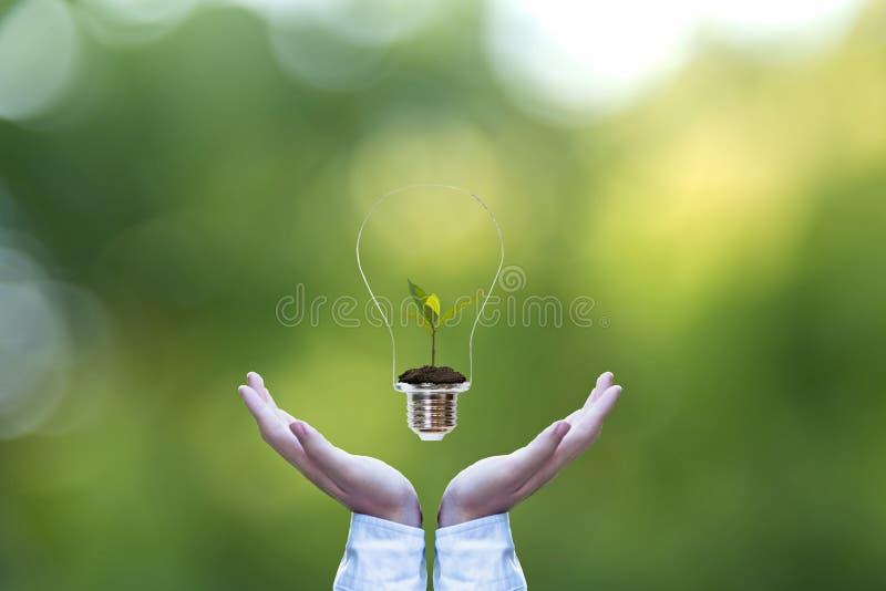 Entregue guardar sobre a ampola com planta verde para dentro para a terra de salvamento, fundo verde da natureza imagens de stock