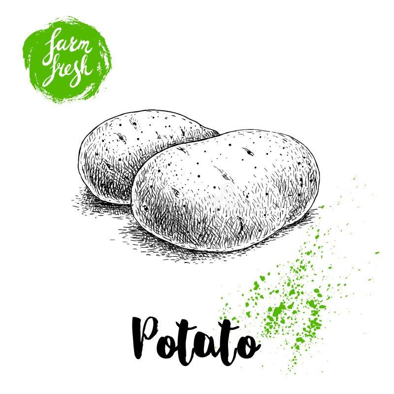 Entregue a ilustração tirada do estilo do esboço de batatas maduras Cartaz fresco dos vegetais do vetor da exploração agrícola ilustração royalty free