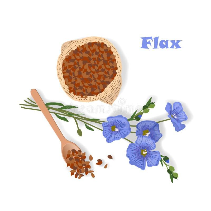 Entregue a ilustração tirada do vetor da planta e das sementes do linho ilustração royalty free