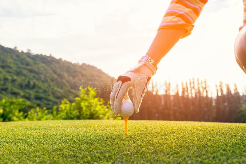 Entregue a mulher asiática que põe a bola de golfe sobre o T com o clube no campo de golfe no dia ensolarado para o esporte saudá fotografia de stock royalty free