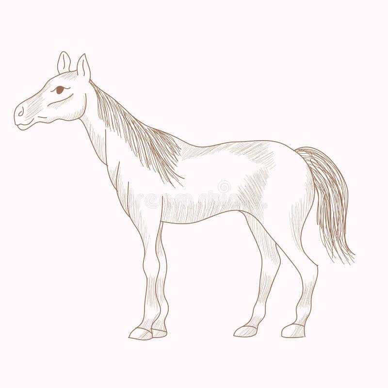 Entregue o cavalo tirado, desenho de lápis da égua ilustração do vetor