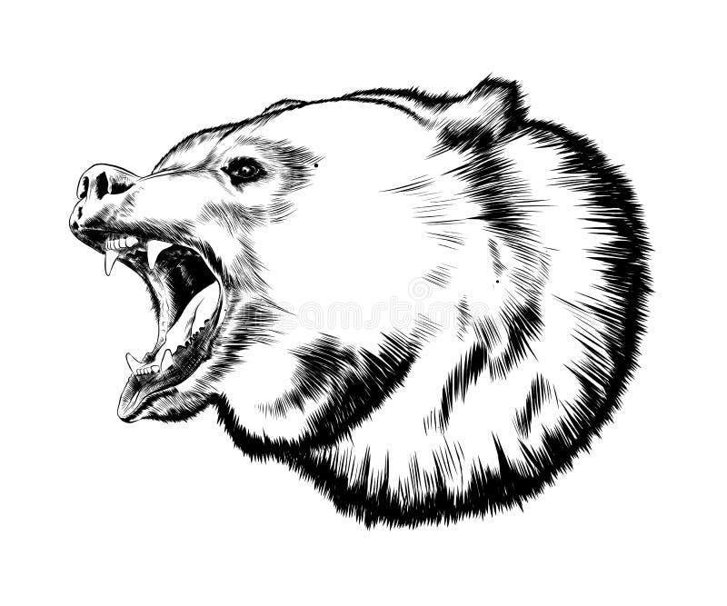 Entregue o esboço tirado do urso no preto isolado no fundo branco Desenho detalhado do estilo do vintage Ilustração do vetor ilustração royalty free