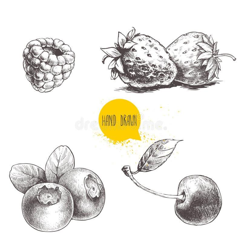 Entregue o grupo de bagas tirado do estilo do esboço no fundo branco Framboesa, morango, cereja e mirtilo ilustração do vetor