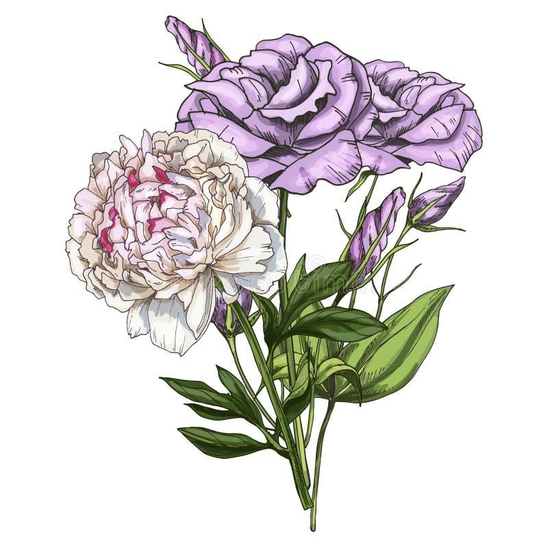 Entregue o ramalhete tirado das flores do eustoma e da peônia isoladas no fundo branco Ilustração botânica ilustração stock