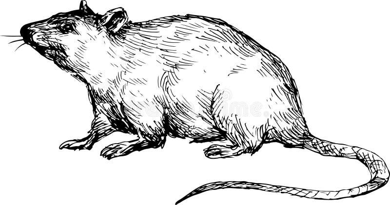Entregue o rato tirado ilustração stock