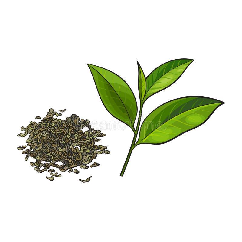 Entregue a pilha tirada do chá verde seco e da folha fresca ilustração do vetor