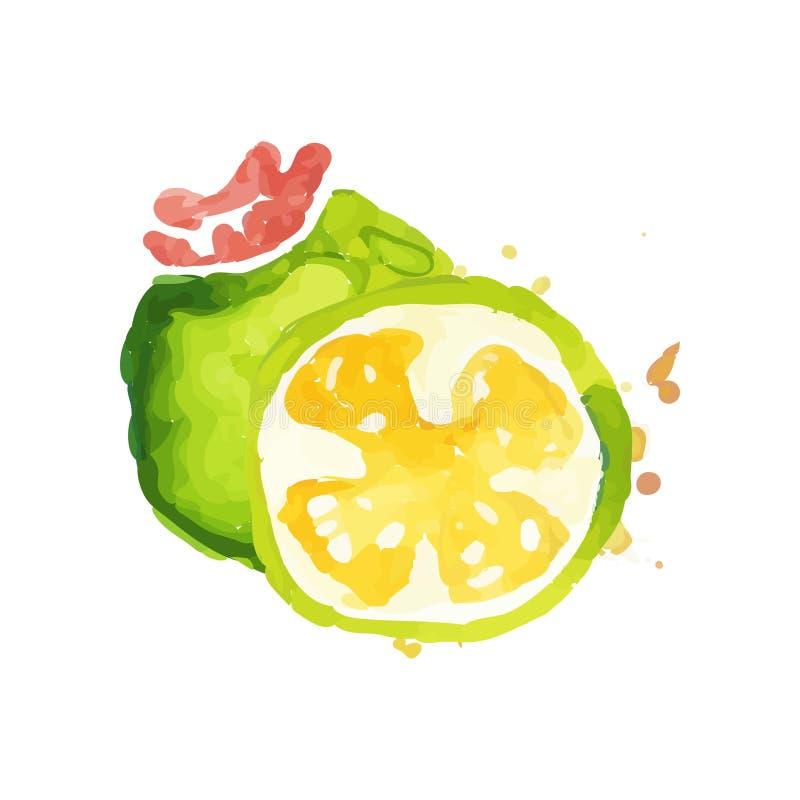 Entregue a pintura tirada da aquarela com inteiro e fatia de feijoa suculento Nutrição saudável Alimento orgânico e saboroso trop ilustração stock