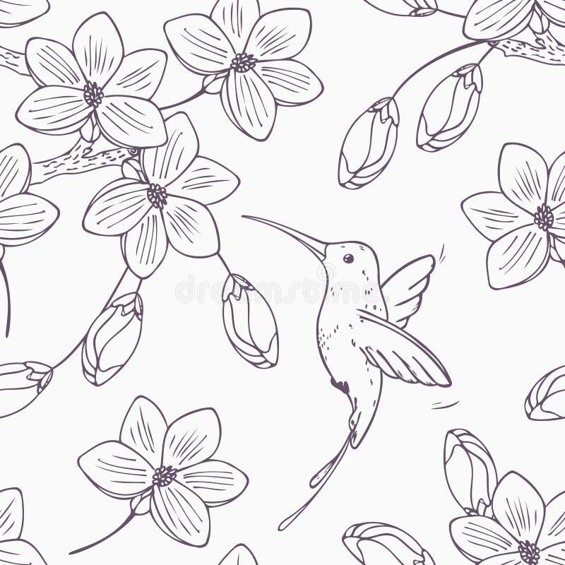 Entregue a versão monocromática tirada do teste padrão sem emenda com o colibri e as flores do pássaro do zumbido ilustração do vetor