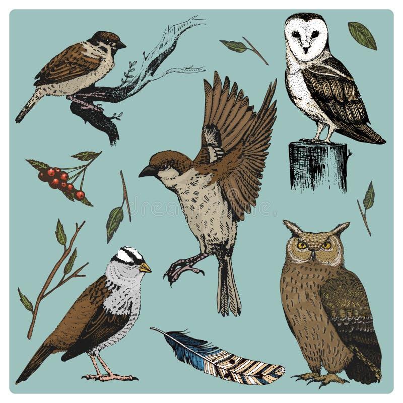 Entregue a vetor tirado o pássaro realístico, estilo gráfico do esboço, grupo de doméstico Turquia e pato ganso e cardeal vermelh ilustração royalty free