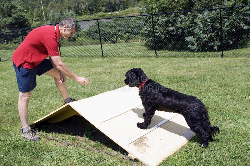 Entrenamiento de la agilidad - perro de agua portugués foto de archivo libre de regalías