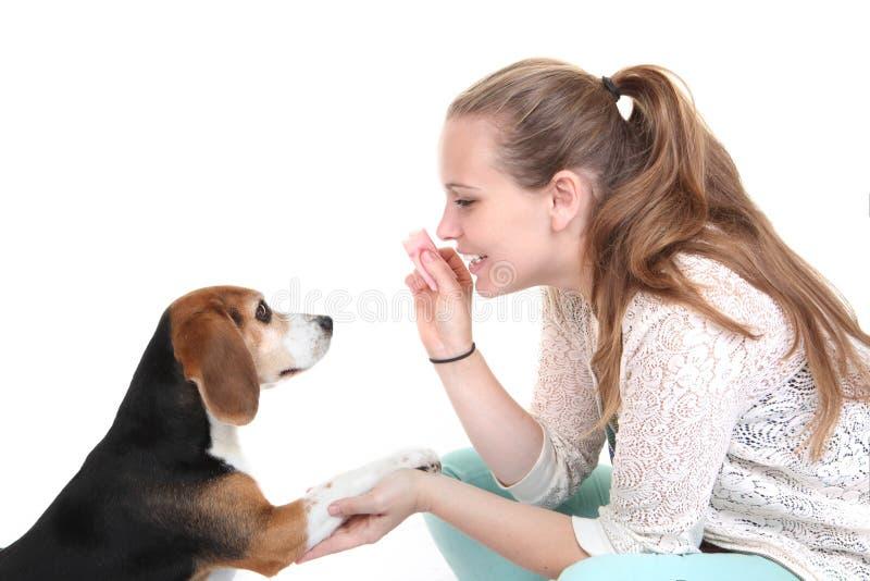 Entrenamiento de la obediencia del perro foto de archivo libre de regalías