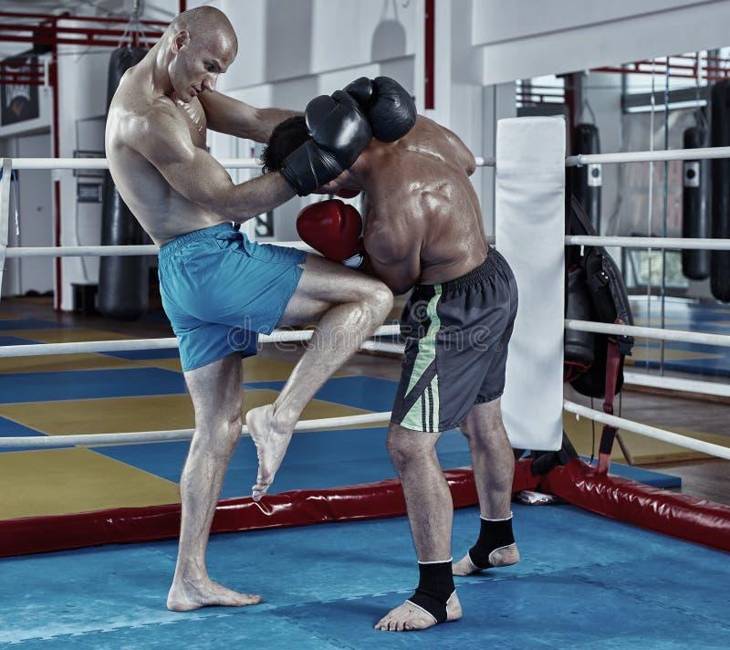 Entrenamiento de los combatientes de Kickbox en el anillo foto de archivo libre de regalías