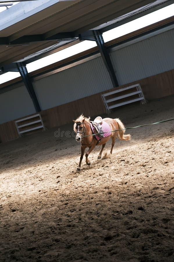 Entrenamiento del caballo imagen de archivo