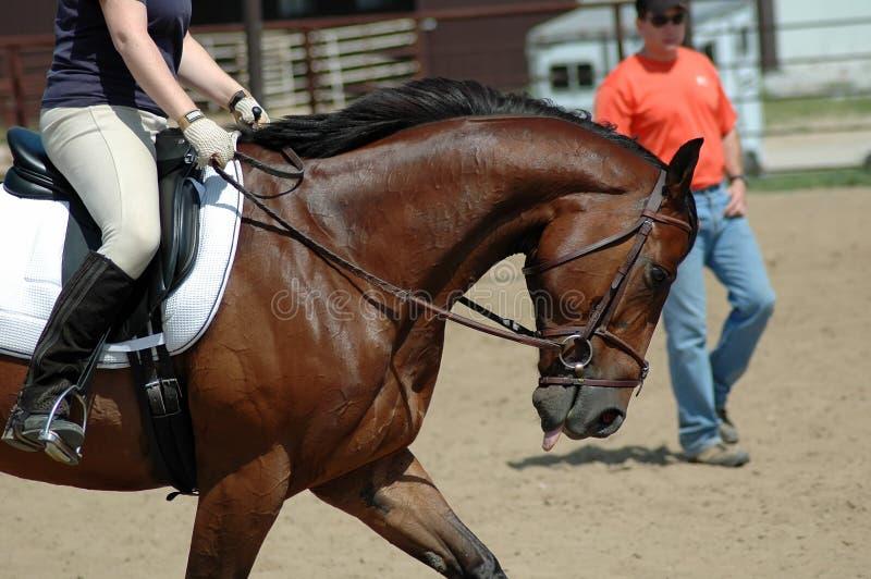 Entrenamiento del caballo fotografía de archivo
