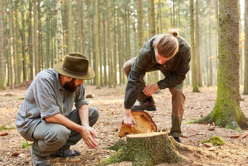 Entrenamiento del hombre al silvicultor en el bosque fotografía de archivo