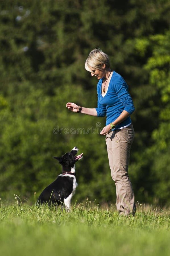Entrenamiento del perro imagenes de archivo