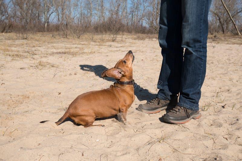 Entrenamiento del perro Día de primavera en la costa imagenes de archivo