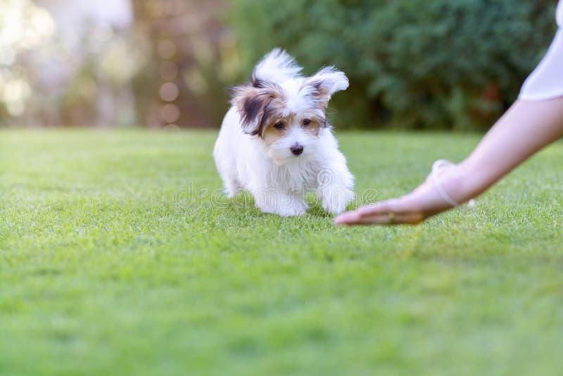 Entrenamiento del perro del patio trasero con el perrito y el dueño lindos foto de archivo libre de regalías