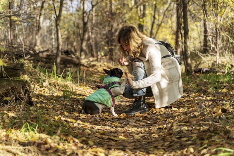 Entrenamiento rubio de la mujer con su dogo francés imagen de archivo libre de regalías