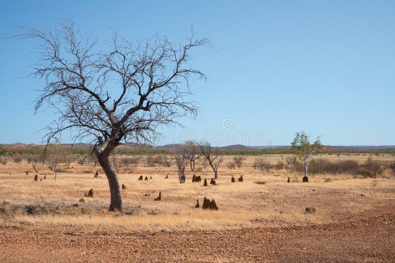 Entroterra asciutta ed arida Australia fotografie stock