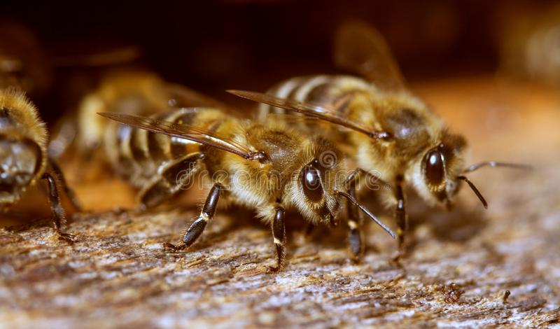 Entry in beehive stock photos