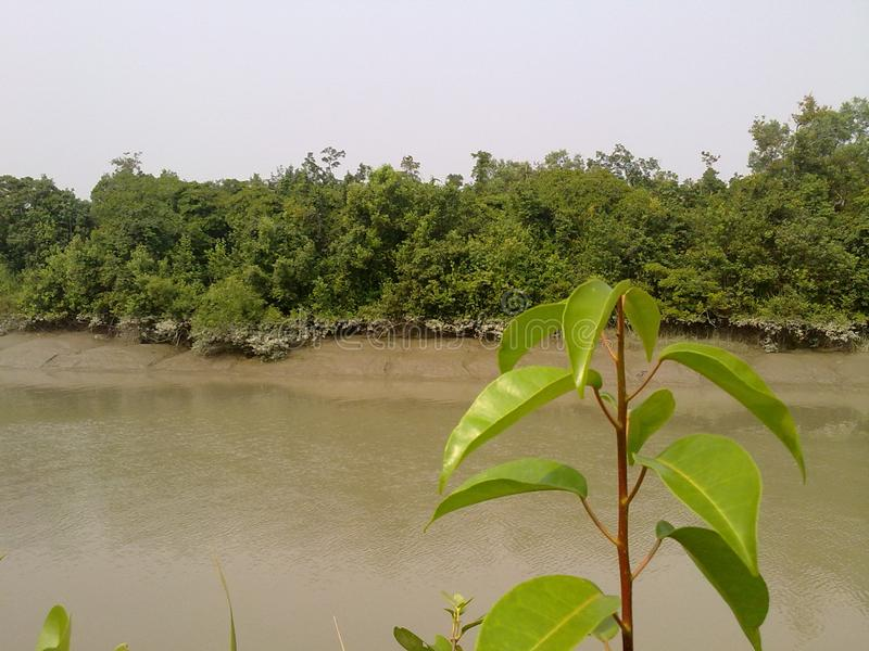 Entry Point of Sunderbans, Bangladesh stock photos