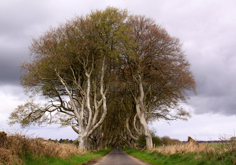 Entry to The Dark Hedges, Northern Ireland. The Dark Hedges, Northern Ireland. A road through dense vegetation royalty free stock photo