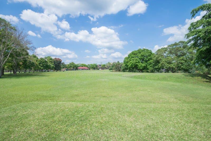 Entspannender schattiger Park des grünen Rasens stockfotos