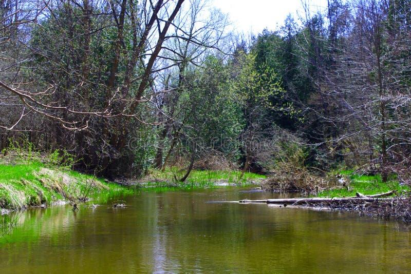 Entspannt sich im Fluss stockfotografie