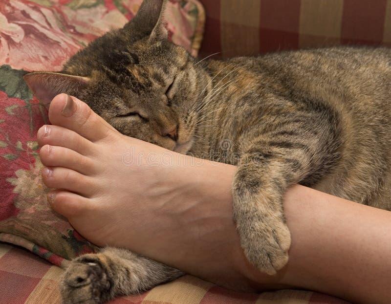 Entspannte Katze stockfoto