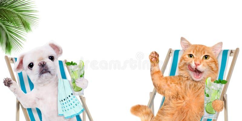 Entspannungsc$sitzen der Katze und des Hundes auf deckchair mit Cocktail lizenzfreie stockfotografie