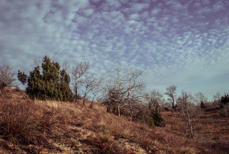 Entspringen Sie auf die Hügel von FÃ-¼ löphà ¡ za stockfotografie