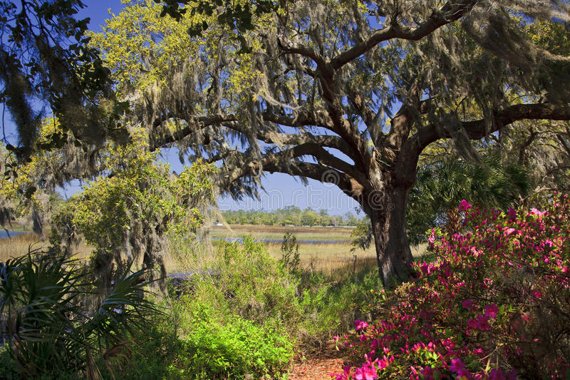 Frühling im Süden lizenzfreie stockfotos