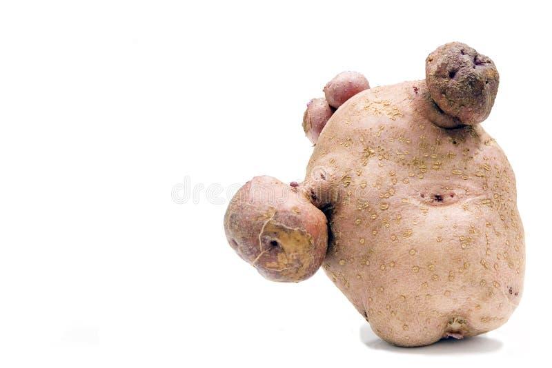Entstelltes potatoe stockfotos