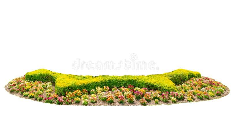 Entwerfen Sie Heckenschnittgrünbaum mit dem bunten Blumenbett, das auf weißem Hintergrund lokalisiert wird stockbild