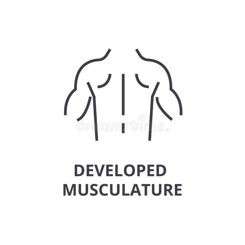 Entwickelte Muskulatur zeichnen dünn Ikone, Zeichen, Symbol, illustation, lineares Konzept, Vektor vektor abbildung