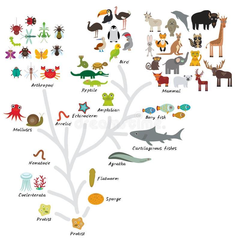 Entwicklung in der Biologie, Entwurfsentwicklung von den Tieren lokalisiert auf weißem Hintergrund die Bildung der Kinder, Wissen vektor abbildung