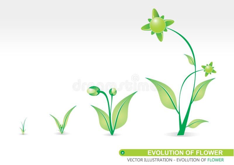 Entwicklung der Blume lizenzfreie abbildung