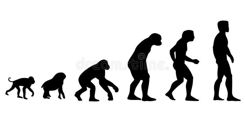 entwicklung Evolutionstheorie der Mannvektorillustration menschliches e stock abbildung