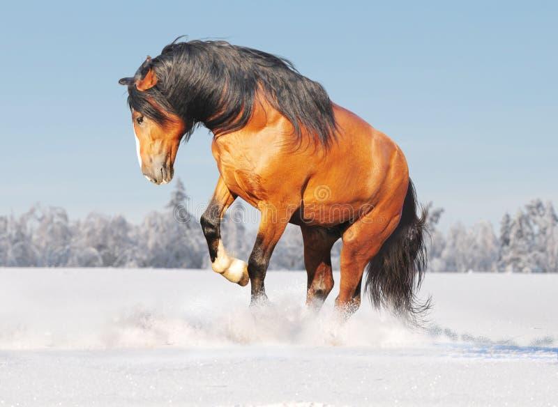 Entwurfspferd im Schnee stockfoto
