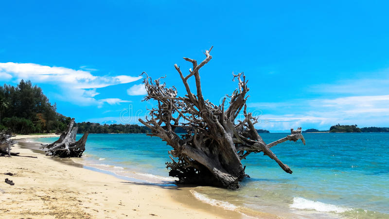 Entwurzelter Baum auf einem Strand stockbild