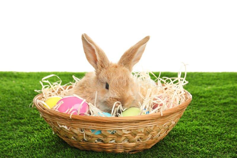 Entzückender Pelz-Osterhase im Weidenkorb und gefärbte Eier auf grünem Gras stockfotos