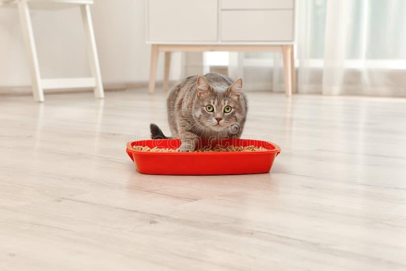Entzückende graue Katze nahe Katzenklo zuhause stockbild