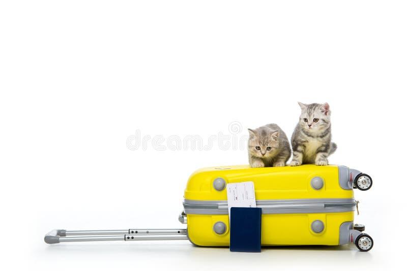 entzückende Kätzchen, die auf Koffer und Pass mit Karte sitzen stockfotografie