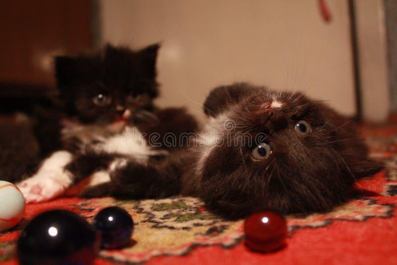 entzückende Kätzchen und Glaskugeln stockfoto