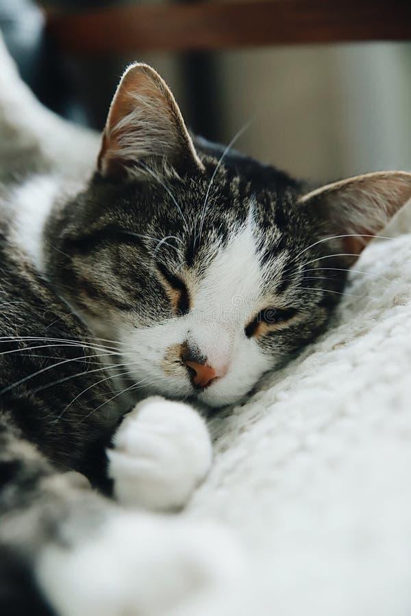 Entzückende Katze lizenzfreies stockfoto