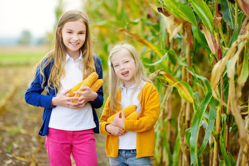 Entzückende Schwestern, die auf einem Maisgebiet am schönen Herbsttag spielen Hübsche Kinder, die Pfeiler von Mais halten Ernten  lizenzfreie stockfotografie