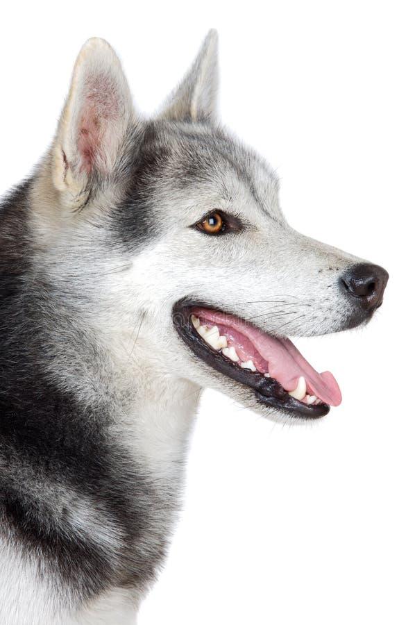 Entzückender Hund stockbild