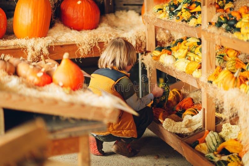 Entzückender kleiner Junge, der Halloween-Kürbis wählt stockfotografie